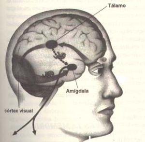 Conexión sinestésica