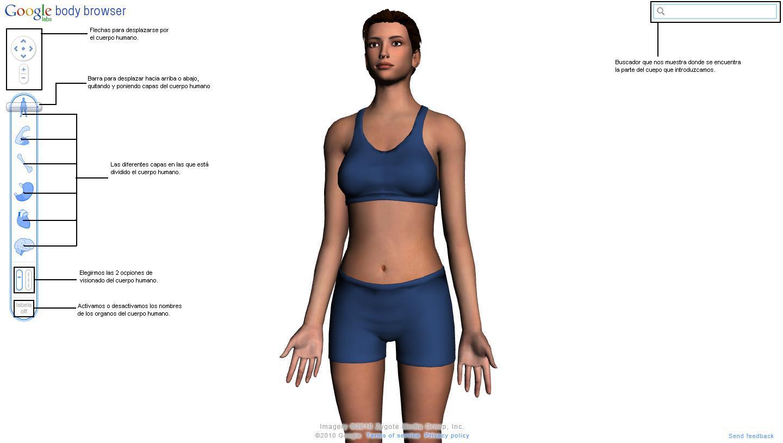 Google Body Browser: El cuerpo humano en 3D. | Bullicius